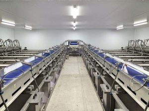 Seafood Processing Factory
